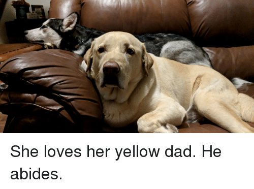 she loves her yellow dad he abides dad meme on