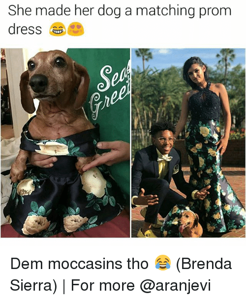 Memes, 🤖, and Her: She made her dog a matching prom Dem moccasins tho 😂 (Brenda Sierra) | For more @aranjevi