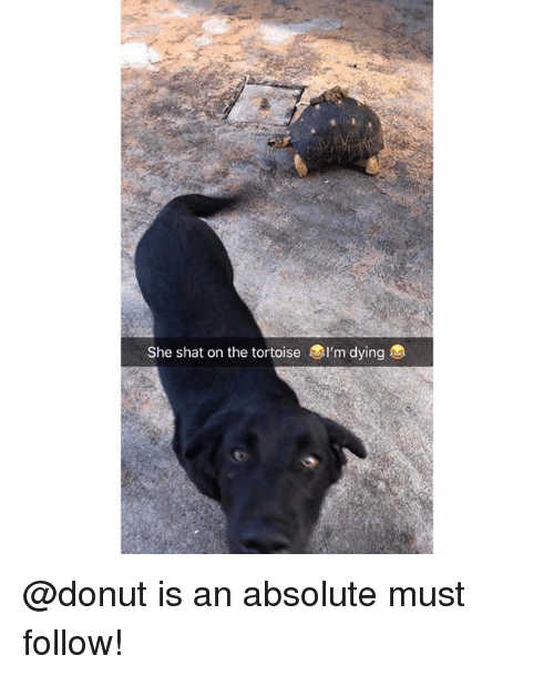 Memes, 🤖, and Tortoise: She shat on the tortoise l'm dying @donut is an absolute must follow!