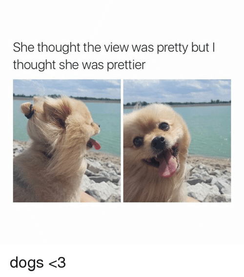 Dogs, The View, and Girl Memes: She thought the view was pretty but I  thought she was prettier dogs <3