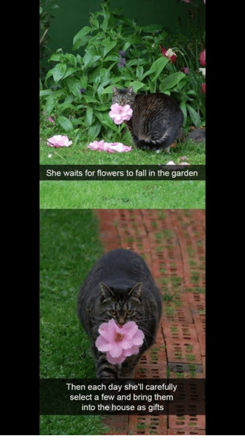 Fall, Memes, and Flowers: She waits for flowers to fall in the garden  Then each day she'll carefully  select a few and bring them  into the house as gifts
