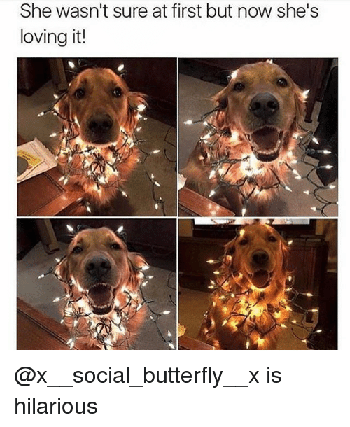 Funny, Butterfly, and Hilarious: She wasn't sure at first but now she's  loving it! @x__social_butterfly__x is hilarious