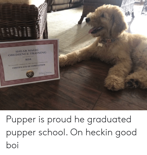 School, Good, and Magic: SHEAR MAGIC  OBEDIENCE TRAINING  TnC  A  KOA  bas successfully completed the AKC Stir PuppY Training course  CERTIFICATE OF COMPLETION Pupper is proud he graduated pupper school. On heckin good boi