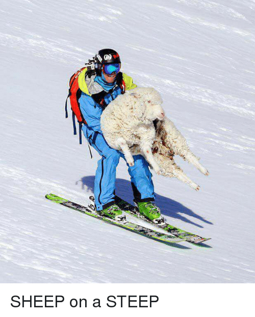 Sheep and Steep: SHEEP on a STEEP