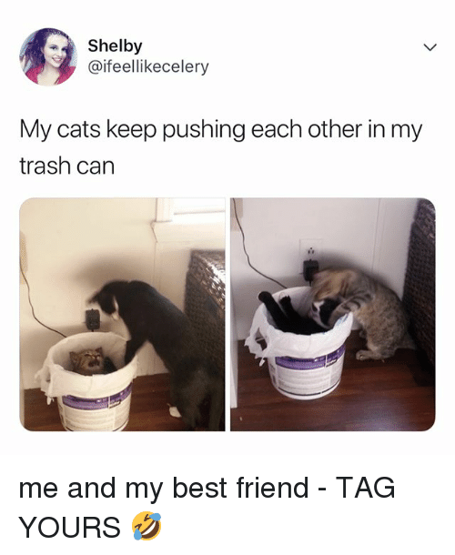 Best Friend, Cats, and Trash: Shelby  @ifeellikecelery  My cats keep pushing each other in my  trash can me and my best friend - TAG YOURS 🤣