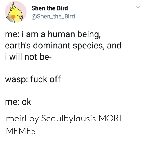 Dank, Memes, and Target: Shen the Bird  @Shen_the_Bird  4  me: i am a human being,  earth's dominant species, and  i will not be-  wasp: fuck off  me: ok meirl by Scaulbylausis MORE MEMES