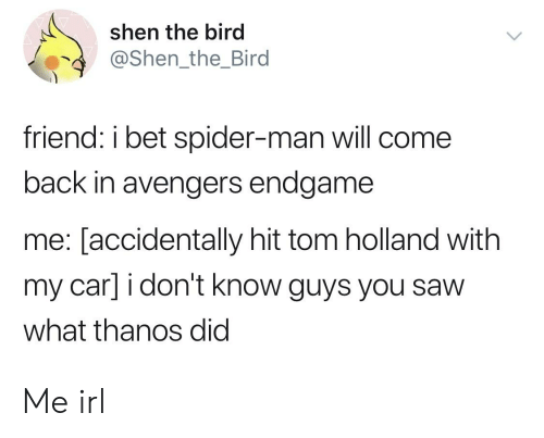 Shen the Bird Friend I Bet Spider-Man Will Come Back in Avengers
