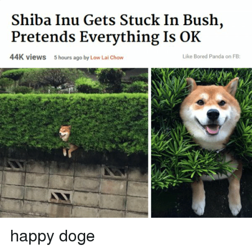 Shiba Inu Gets Stuck In Bush Pretends Everything Is Ok 44k Views 5