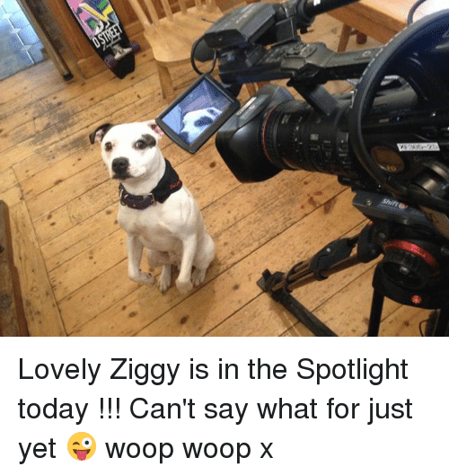 Memes, 🤖, and Ziggy: Shift e Lovely Ziggy is in the Spotlight today !!! Can't say what for just yet 😜 woop woop x