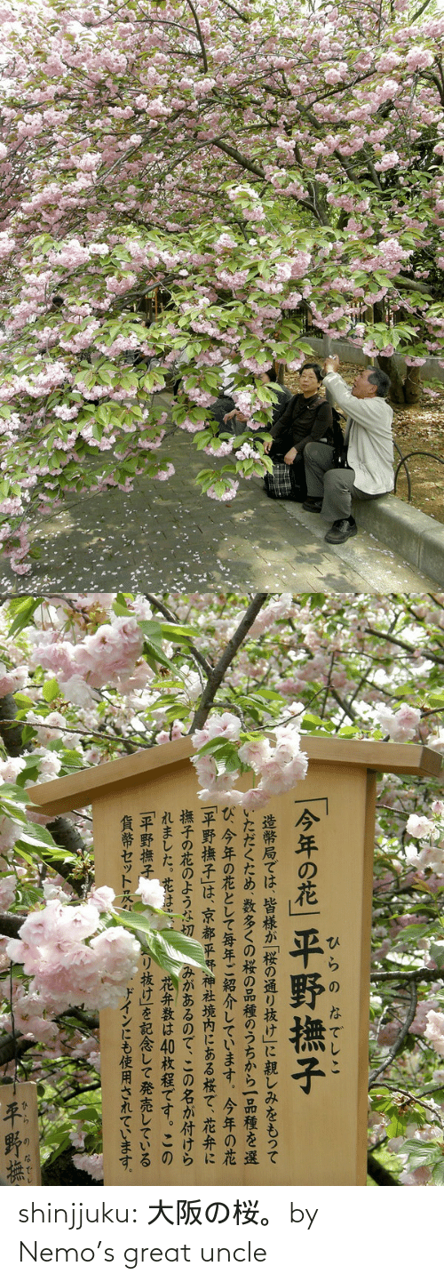Tumblr, Blog, and Flickr: shinjjuku:  大阪の桜。by  Nemo's great uncle
