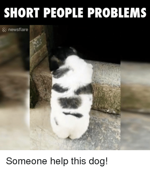 short people problems newsflare someone help this dog 3753938 ✅ 25 best memes about short people problems short people,Short People Meme