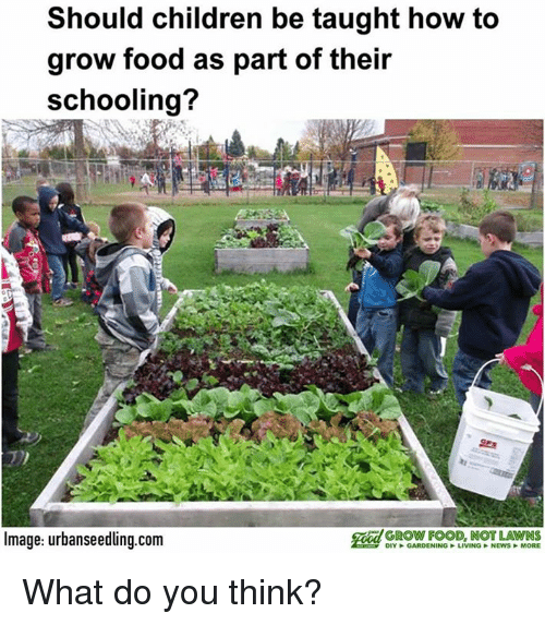 Memes And Grow Should Children Be Taught How To Food As