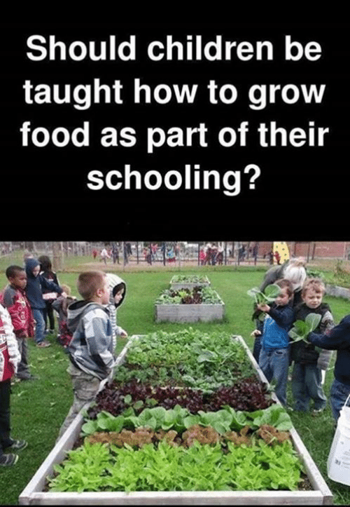 Children, Food, and Memes: Should children be  taught how to grow  food as part of their  schooling?
