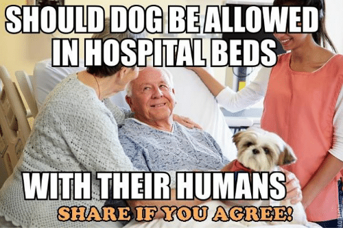 should dog be allowed in hospital beds with their humans 5779229 ✅ 25 best memes about hospital bed hospital bed memes,Hospital Memes
