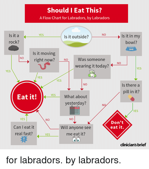 Should I Eat This A Flow Chart For Labradors By Labradors Is It A