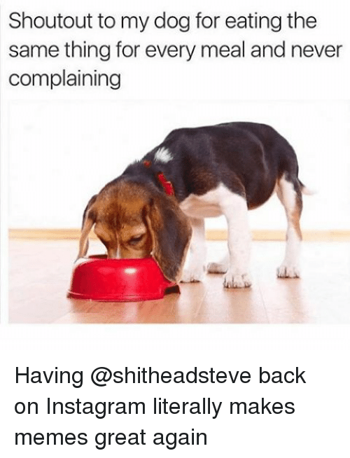Funny, Girl Memes, and My Dog: Shoutout to my dog for eating the  same thing for every meal and never  complaining Having @shitheadsteve back on Instagram literally makes memes great again