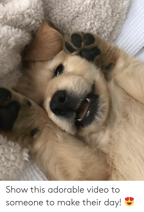 Video, Adorable, and Day: Show this adorable video to someone to make their day! 😍