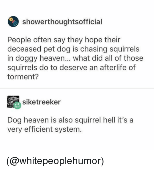 Heaven, Squirrel, and Dank Memes: showerthoughtsofficial  People often say they hope their  deceased pet dog is chasing squirrels  in doggy heaven... what did all of those  squirrels do to deserve an afterlife of  torment?  siketreeker  Dog heaven is also squirrel hell it's a  very efficient system. (@whitepeoplehumor)