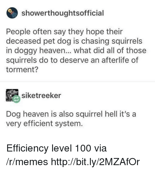 Anaconda, Heaven, and Memes: showerthoughtsofficial  People often say they hope their  deceased pet dog is chasing squirrels  in doggy heaven... what did all of those  squirrels do to deserve an afterlife of  torment?  siketreeker  Dog heaven is also squirrel hell it's a  very efficient system. Efficiency level 100 via /r/memes http://bit.ly/2MZAfOr