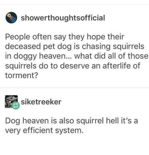 Heaven, Squirrel, and Dank Memes: showerthoughtsofficial  People often say they hope their  deceased pet dog is chasing squirrels  in doggy heaven... what did all of those  squirrels do to deserve an afterlife of  torment?  siketreeker  Dog heaven is also squirrel hell it's a  very efficient system
