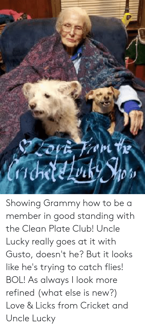 Club, Love, and Memes: Showing Grammy how to be a member in good standing with the Clean Plate Club!  Uncle Lucky really goes at it with Gusto, doesn't he?  But it looks like he's trying to catch flies!  BOL!  As always I look more refined  (what else is new?) Love & Licks from Cricket and Uncle Lucky
