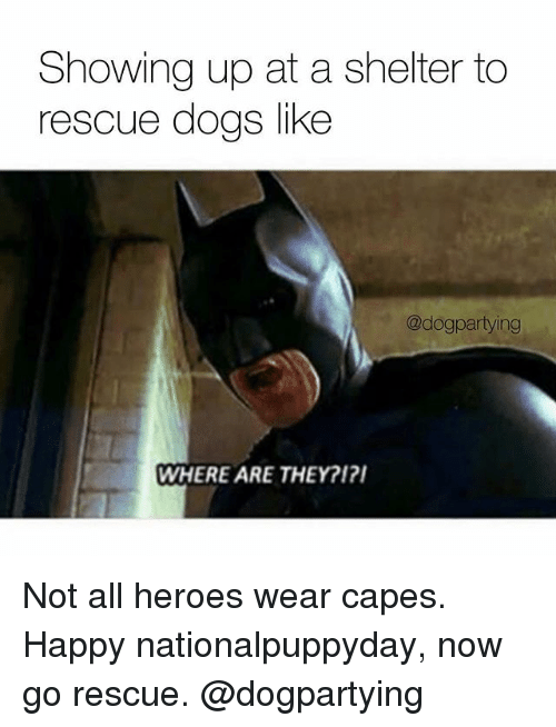 Dogs, Memes, and Happy: Showing up at a shelter to  rescue dogs like  @dogpartying  WHERE ARE THEY?1? Not all heroes wear capes. Happy nationalpuppyday, now go rescue. @dogpartying