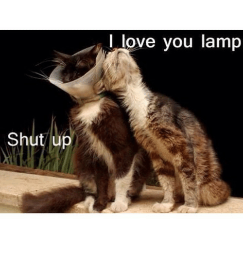 Funny, Love, And Shut Up: Shut Up I Love You Lamp