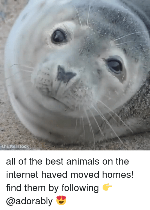 Animals, Internet, and Best: shutterstoc all of the best animals on the internet haved moved homes! find them by following 👉@adorably 😍