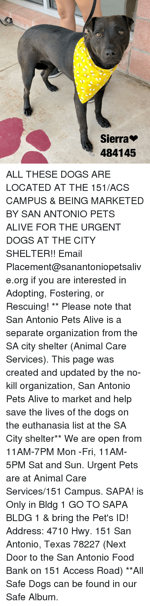 Alive, Dogs, and Food: Sierra  484145 ALL THESE DOGS ARE LOCATED AT THE 151/ACS CAMPUS & BEING MARKETED BY SAN ANTONIO PETS ALIVE FOR THE URGENT DOGS AT THE CITY SHELTER!!  Email Placement@sanantoniopetsalive.org if you are interested in Adopting, Fostering, or Rescuing!                                                                                                                                                                                                                                                                                                                                                             ** Please note that San Antonio Pets Alive is a separate organization from the SA city shelter (Animal Care Services). This page was created and updated by the no-kill organization, San Antonio Pets Alive to market and help save the lives of the dogs on the euthanasia list at the SA City shelter**  We are open from 11AM-7PM Mon -Fri, 11AM-5PM Sat and Sun. Urgent Pets are at Animal Care Services/151 Campus. SAPA! is Only in Bldg 1 GO TO SAPA BLDG 1 & bring the Pet's ID! Address: 4710 Hwy. 151 San Antonio, Texas 78227 (Next Door to the San Antonio Food Bank on 151 Access Road) **All Safe Dogs can be found in our Safe Album.