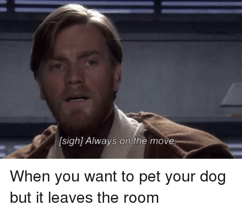 Dog, Pet, and Move: sigh] Always on the move