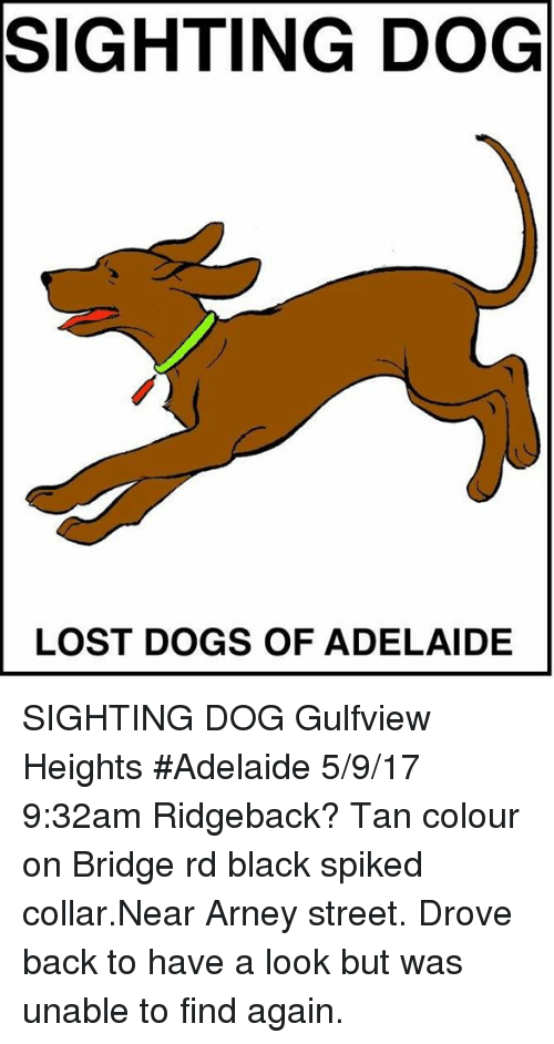 Dogs, Memes, and Lost: SIGHTING DOG  LOST DOGS OF ADELAIDE SIGHTING DOG Gulfview Heights #Adelaide 5/9/17 9:32am Ridgeback? Tan colour on Bridge rd black spiked collar.Near Arney street. Drove back to have a look but was unable to find again.
