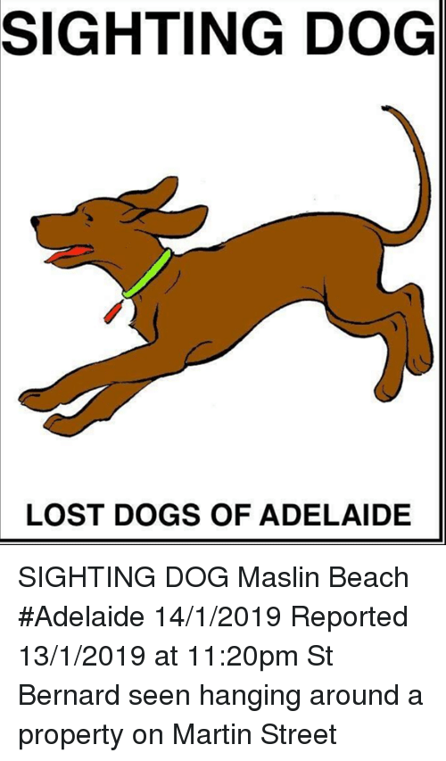Dogs, Martin, and Memes: SIGHTING DOG  LOST DOGS OF ADELAIDE SIGHTING DOG Maslin Beach #Adelaide 14/1/2019  Reported 13/1/2019 at 11:20pm St Bernard seen hanging around a property on Martin Street