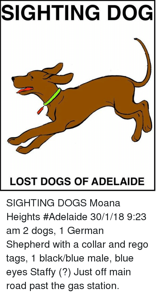Dogs Memes And Lost Sighting Dog Lost Dogs Of Adelaide Sighting Dogs Moana