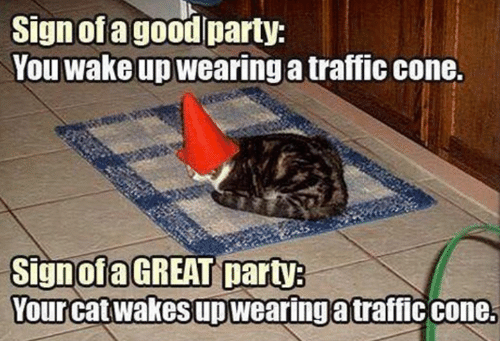 sign of a goodlparty you wake up wearing a traffic 16542147 25 best traffic cones memes coning memes