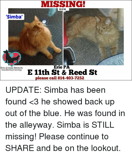 e6dc3c21d simba-erie-animal-network-social-networkingtosave-strays-missing-12-2-16-erie-11122127.png
