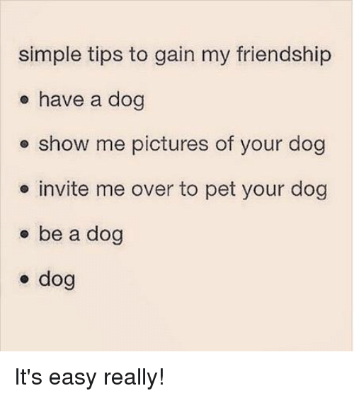 Memes, Pictures, and Friendship: simple tips to gain my friendship  e have a dog  e show me pictures of your dog  e invite me over to pet your dog  o be a dog  e dog It's easy really!