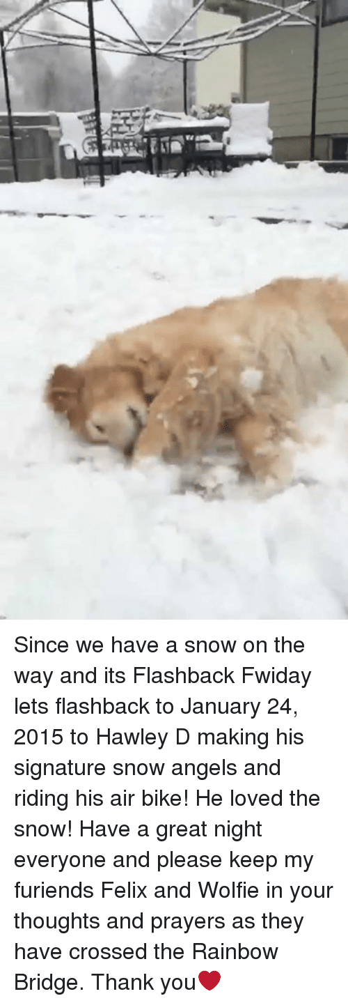 Memes, Angel, and Angels: Since we have a snow on the way and its Flashback Fwiday lets flashback to January 24, 2015 to Hawley D making his signature snow angels and riding his air bike! He loved the snow! Have a great night everyone and please keep my furiends Felix and Wolfie in your thoughts and prayers as they have crossed the Rainbow Bridge. Thank you❤️
