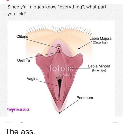 Intelligible Clitoris and vagina licking your