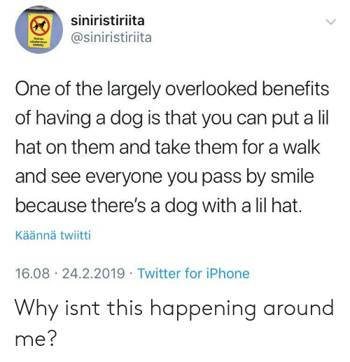 Iphone, Twitter, and Smile: siniristiriita  @siniristiriita  One of the largely overlooked benefits  of having a dog is that you can put a lil  hat on them and take them for a walk  and see everyone you pass by smile  because there's a dog with a lil hat.  Käännä twiitti  16.08 24.2.2019 Twitter for iPhone Why isnt this happening around me?