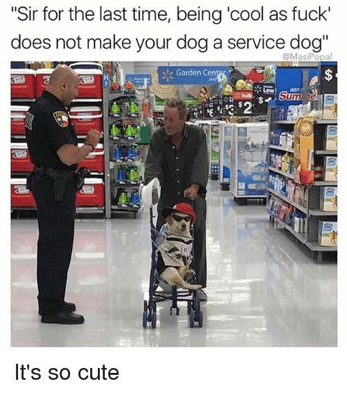 """Cute, Memes, and Cool: """"Sir for the last time, being 'cool as fuck'  does not make your dog a service dog""""  @MasiPopal  Garden Cente r  LowUST  Sum  25 It's so cute"""