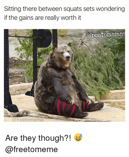 Gym, Squats, and They: Sitting there between squats sets wondering  if the gains are really worth it  @freetomemes  @freetomeme Are they though?! 😅 @freetomeme