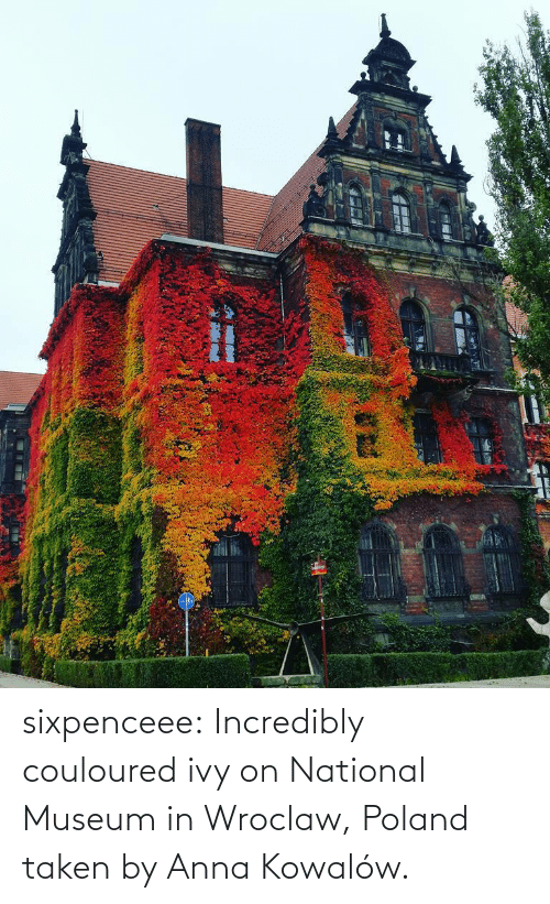 Anna, Facebook, and Taken: sixpenceee: Incredibly couloured ivy on  National Museum in Wroclaw, Poland taken by  Anna Kowalów.
