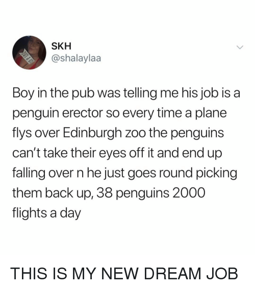 Penguin, Penguins, and Time: SKH  @shalaylaa  Boy in the pub was telling me his job isa  penguin erector so every time a plane  flys over Edinburgh zoo the penguins  can't take their eyes off it and end up  falling over n he just goes round picking  them back up, 38 penguins 2000  flights a day THIS IS MY NEW DREAM JOB