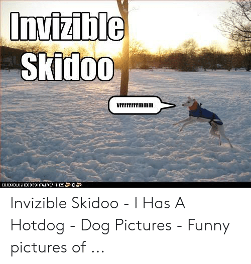 Funny, Pictures, and Dog: Skidoo  ICANHSCHEE2EURGER COM Invizible Skidoo - I Has A Hotdog - Dog Pictures - Funny pictures of ...