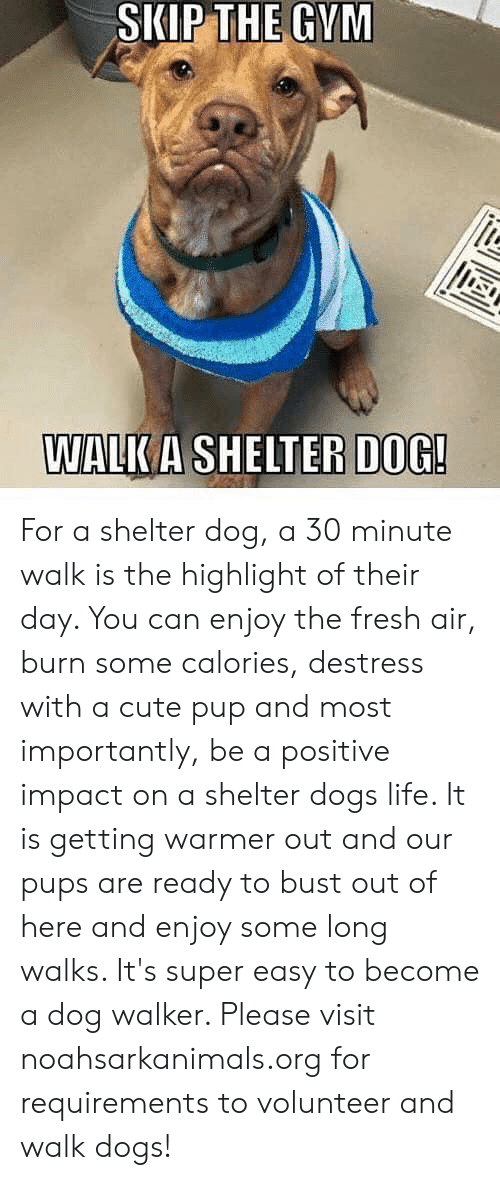 Cute, Dogs, and Fresh: SKIP THE GVM  WALKA SHELTER  DOG! For a shelter dog, a 30 minute walk is the highlight of their day. You can enjoy the fresh air, burn some calories, destress with a cute pup and most importantly, be a positive impact on a shelter dogs life. It is getting warmer out and our pups are ready to bust out of here and enjoy some long walks. It's super easy to become a dog walker. Please visit noahsarkanimals.org for requirements to volunteer and walk dogs!