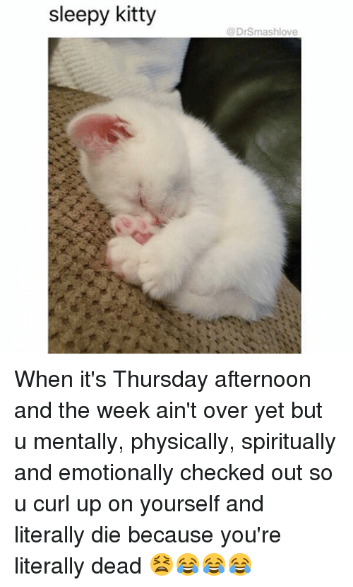 Memes, 🤖, and Curl: sleepy kitty  DrSmashlove When it's Thursday afternoon and the week ain't over yet but u mentally, physically, spiritually and emotionally checked out so u curl up on yourself and literally die because you're literally dead 😫😂😂😂