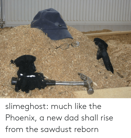 Dad, Target, and Tumblr: slimeghost: much like the Phoenix, a new dad shall rise from the sawdust reborn
