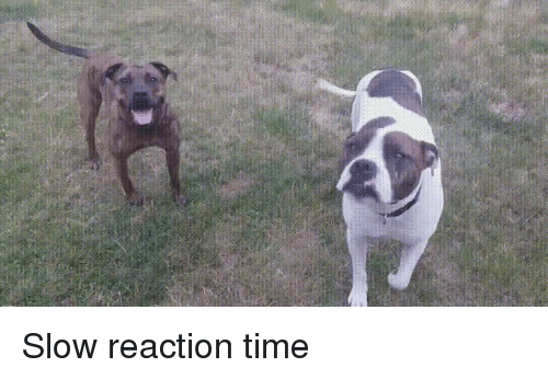Slow Reaction Time | Dogs Meme on ME.ME