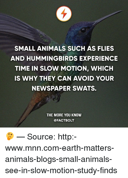 Animals, Memes, and Slow Motion: SMALL ANIMALS SUCH AS FLIES  AND HUMMINGBIRDS EXPERIENCE  TIME IN SLOW MOTION, WHICH  IS WHY THEY CAN AVOID YOUR  NEWSPAPER SWATS.  THE MORE YOU KNOW  @FACT BOLT 🤔 — Source: http:-www.mnn.com-earth-matters-animals-blogs-small-animals-see-in-slow-motion-study-finds