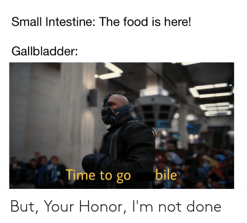Food, Time, and Gallbladder: Small Intestine: The food is here!  Gallbladder:  Time to go  bile But, Your Honor, I'm not done